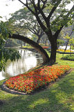 Flower garden. Flowers in landscaped flower garden Royalty Free Stock Photos