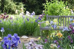 Flower Garden. With a wooden bench Royalty Free Stock Photo