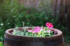 Flower garden Royalty Free Stock Photos