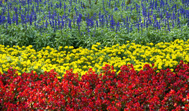 Flower garden. Garden of blue, red and yellow flowers Stock Photos