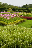 Flower garden Stock Image