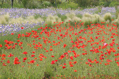 Flower garden Stock Photo