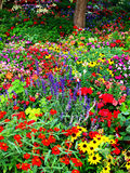 Flower Garden. Fresh flower garden with tree and leaves Stock Photos