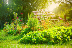 Flower garden. Around the house Stock Images