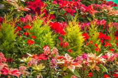 Flower Garden. Colorful Flowers the planted in a garden on a flower bed Royalty Free Stock Photo