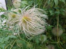 Flower. In the garden Stock Photos