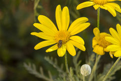 Flower  in the garden Stock Images