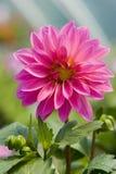 Flower in garden stock photo