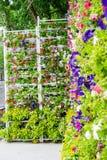 Flower garden at Ba Na Hills, Da Nang, Vietnam Royalty Free Stock Photo