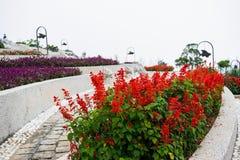 Flower garden at Ba Na Hills, Da Nang, Vietnam Royalty Free Stock Images