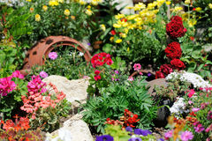Flower garden background Royalty Free Stock Images