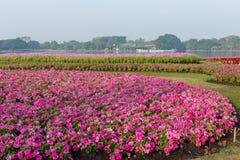 Flower garden background Royalty Free Stock Photos