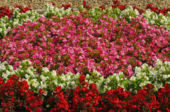 Flower Garden background Royalty Free Stock Photos