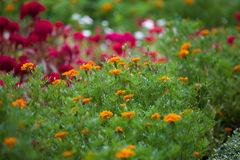Flower garden. Stock Image