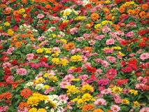 Flower-Garden Bed. Garden bed full of brightly coloured flowers stock photo