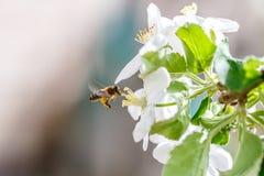 Flower garden bee. Nature background stock photos