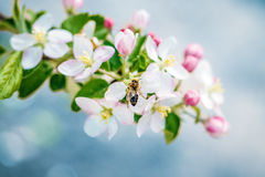 Flower garden bee. Nature background royalty free stock image