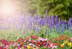 Flower garden Bloom Summer Royalty Free Stock Images