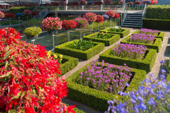 Flower garden. Blooming flowers in a beautiful garden with square cut hedges Stock Images