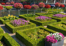 Flower garden. Blooming flowers in a beautiful garden with square cut hedges Stock Photography