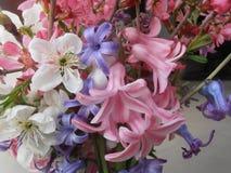 Flower from garden Stock Images