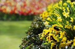 Flower Garden Royalty Free Stock Photography