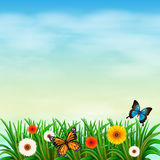 A flower garden with butterflies Royalty Free Stock Photo