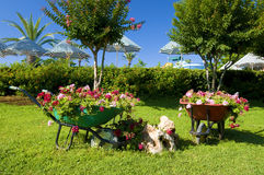 Flower garden with carts Royalty Free Stock Images