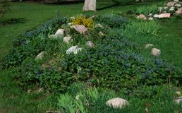 Flower garden in the city park, flowers and blue flowers on the hill with stones stock photography