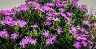 Flower garden at the city park Royalty Free Stock Images