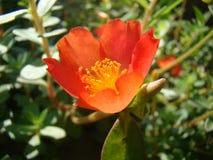 Flower in garden. Close up photo of flower in garden Royalty Free Stock Image
