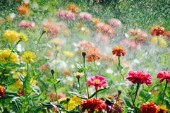 Flower garden. Colorful flower in garden stock images