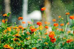 Flower garden. Colorful flower in garden stock photography