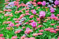 Flower garden with colorful Royalty Free Stock Photos