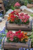 Flower Garden Stock Images