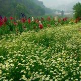 Flower garden at Doi Inthanon Stock Photography