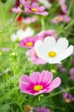 Flower garden in the field, pink flowers on the nice happy day Stock Photo