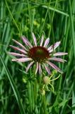 Flower in garden stock photography