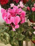 Flower in garden Stock Images