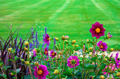 Flower garden. Flowers and grass in Luxembourg gardens, Paris stock image