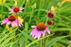 Flower Garden Royalty Free Stock Image