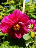 Blume aus dem Garten. Flower garden Garten stock photography