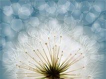 Flower garden graphic Stock Photo