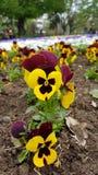 Flower . Stock Image