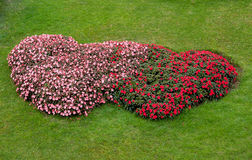 Flower garden heart shape Royalty Free Stock Photography