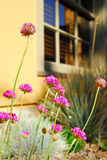 Flower garden at house Stock Photo