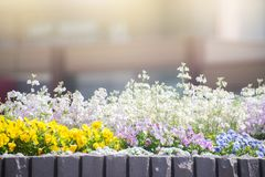 Flower garden at japan. Royalty Free Stock Photos