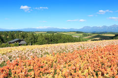Flower garden in Kamifurano, with mountain view in Furano, Hokkaido Japan Stock Photos