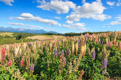 Flower garden in Kamifurano, with mountain view in Furano, Hokkaido Japan Stock Photos