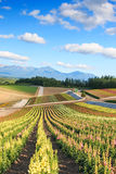 Flower garden in Kamifurano, with mountain view in Furano, Hokkaido Japan Royalty Free Stock Photo